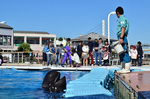 ふれあいラグーン イルカクジラとあそぼう 八景島シーパラダイス.jpg