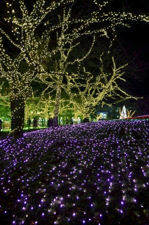 光の花畑 さがみ湖イルミリオン プレジャーフォレスト.jpg
