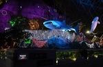 アクアイルミリウム 4Fアクアミュージアム 甚平鮫ライトアップ横浜八景島.jpg