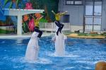 シロイルカ 海の動物たちのショー WA2nd 八景島シーパラダイス.jpg